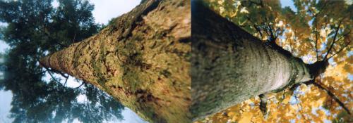 Jaxun-Doten_Two-Point-Perspective.jpg