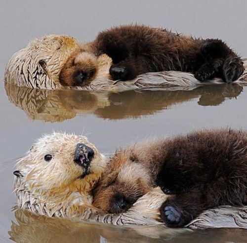 otters_hugging.jpg
