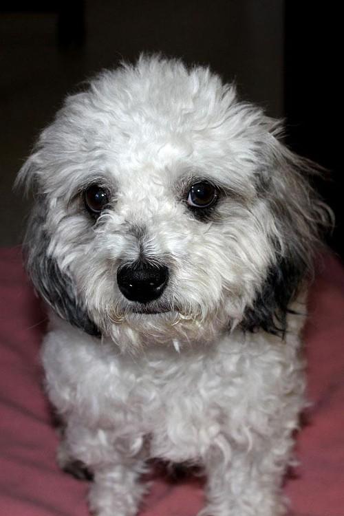 dog_adoption_photo.jpg